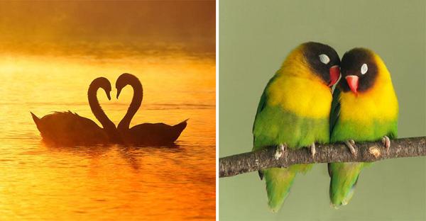 Aşk Hakkında Bilmeniz Gereken 20 Psikolojik Bulgu -1