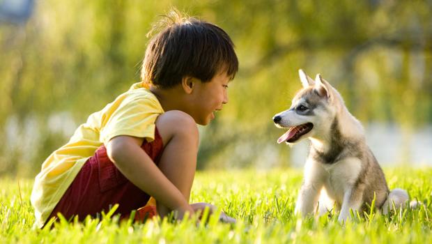 Hayvanların Psikolojisi Nasıldır?