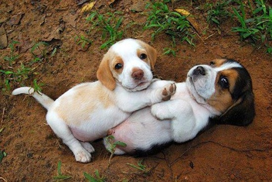 Puppies Play