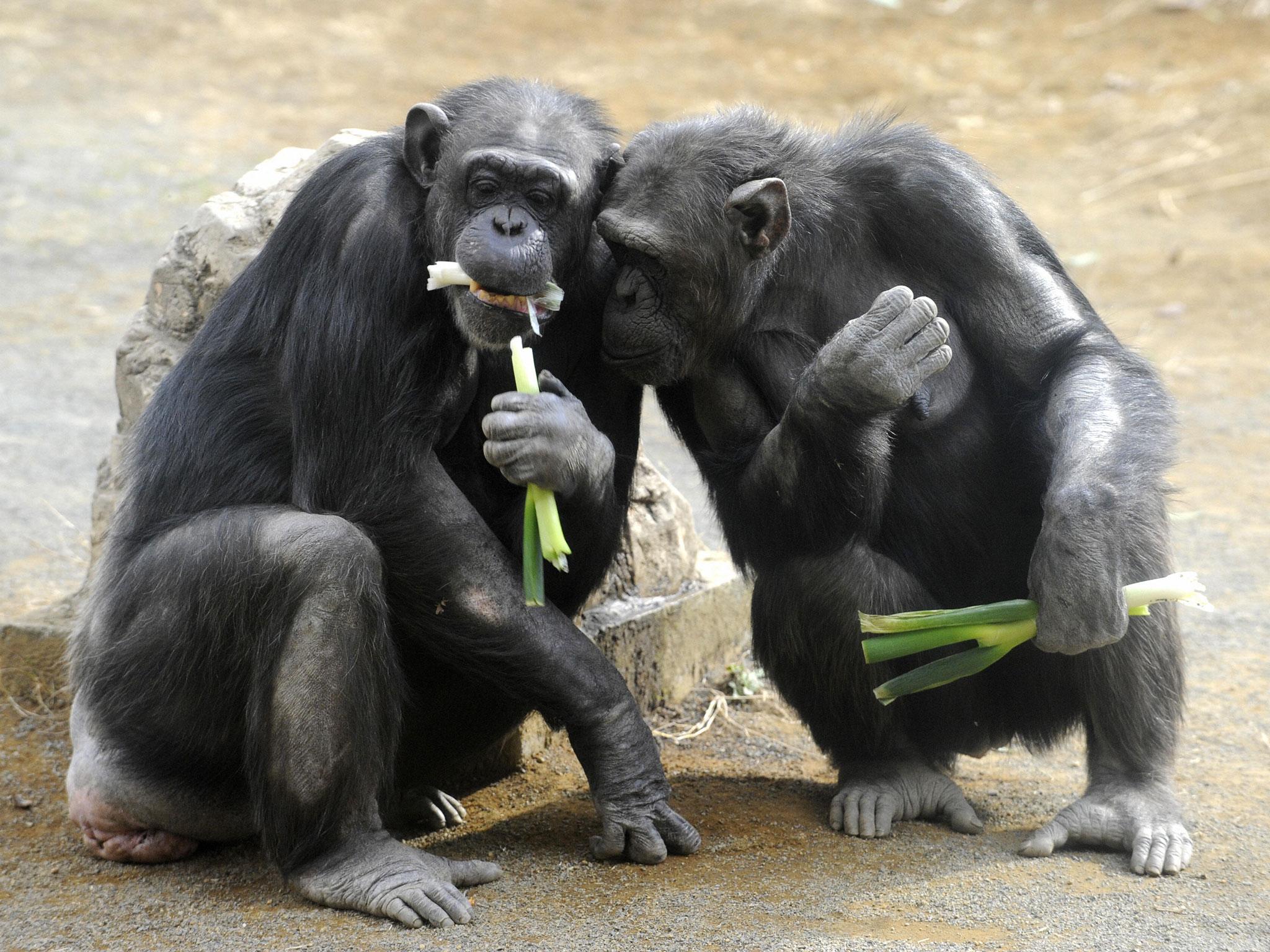 Maymunlar adalete önem verir.